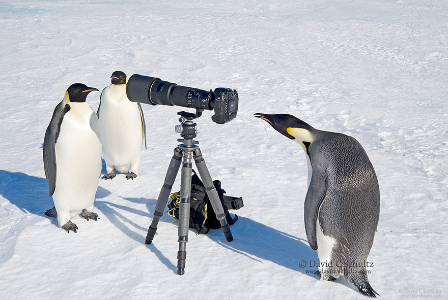 penguins and camera